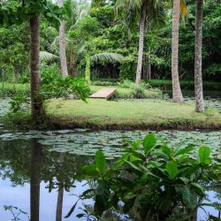Siri Wedamadura Villa has a natural pond filled with water lillies