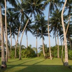 Maggona Beach Villa's gardens draw the eyes to the distant horizon
