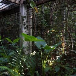 Maggona Villa design incorporates garden structure