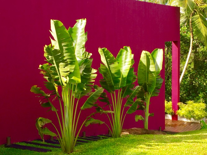 Deep bold colours offset the garden at Modern Luxury Villa Wambatu